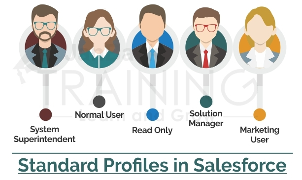 Describe the several Standard Profiles in Salesforce?